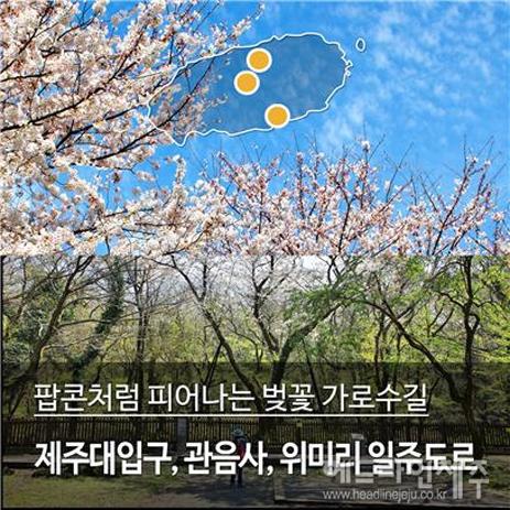 벚꽃길.jpg