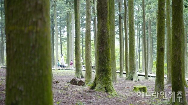 2-숲길_메인.jpg