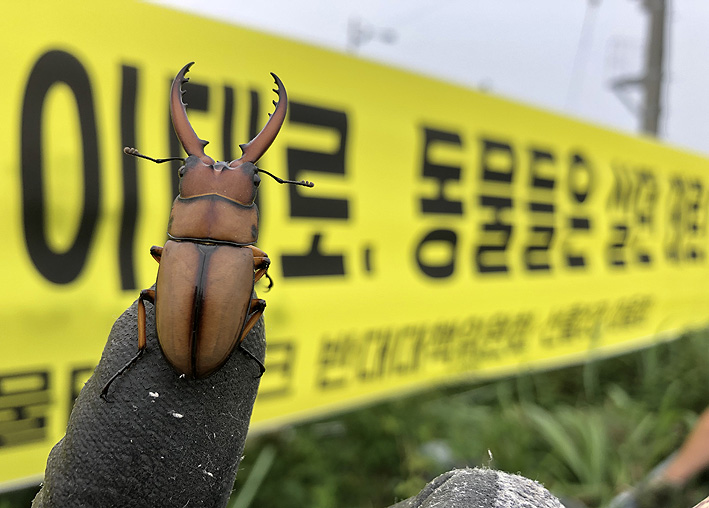 두점박이사슴벌레_사진.jpg