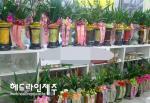 시장님 취임축하 꽃화분...청사 복도까지 점령 '대박'