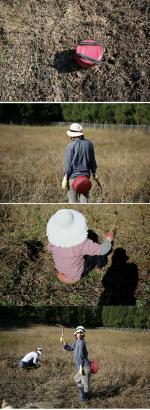 이효리 제주도 콩 수확 현장...'엉덩이 의자' 공개
