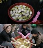 """이효리 블로그 근황공개...""""이웃들과 김장 담궜어요"""""""