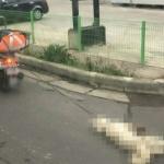 오토바이에 강아지 묶어 잔혹한 학대...누리꾼 '분노'