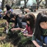 하도초, 전교생이 함께한 '고장밧 손심엉 가꿀락' 학교 꽃밭