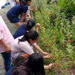 구엄초, 봉숭아꽃 활용 전학년 프로젝트 수업