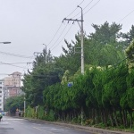 아파트 밀집지역, '숲지대 허물어 주차장 조성' 논란