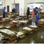 제주 연근해 어선어업 활기...갈치.참조기 어획량 부쩍↑