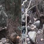 제주 절대보전지역 희귀 용암석 불법 채취 일당 검거