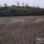 제주 당근.월동무, 내년부터 농산물 재해보험 적용