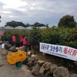 자유한국당 제주도당, 감귤 수확 일손돕기 현장활동 전개