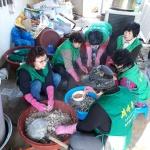 구좌읍, 새마을부녀회 향토음식점 밑반찬 만들기 진행