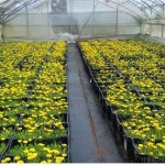 구좌읍 꽃 30만본 생산, 사계절 꽃피는 특화거리 조성
