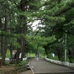 장기미집행 도시계획 예산, 도로 건설에만 '펑펑'