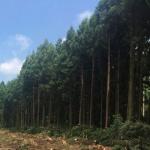 환경훼손 논란 '비자림로' 공사, 다시 전면 중단