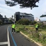 애월읍, 해안도로 풀베기 활동 전개