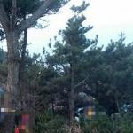 제주, 소나무 600여그루에 제초제 주입 개발사업자 '실형'