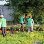 오라동 새마을부녀회, 정실 재활용도움센터 공원 해바라기 식재
