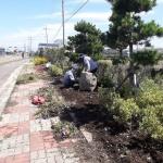 애월읍, 사계절 꽃피는 거리조성 위한 계절화 교체 식재