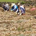 제주도의회, 마늘 정부수매 비축계획 개선 결의안 상임위 통과