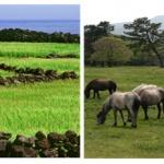 고려시대의 탐라의 농업