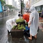 연동, 주요도로변 천일홍 계절화 2000본 식재