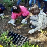 제주농업기술센터, 초등학교 텃밭용 겨울채소 5종 공급