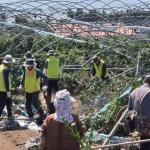 제주농협, 태풍피해 농가 재해복구 일손돕기