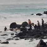 제주, 함덕해수욕장서 표류 관광객 2명 구조