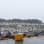 제주 항.포구, 어선들 속속 피항...여객선 운항 중단