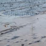 제주도 또 태풍 '상흔'...700mm '물폭탄'에 농경지 쑥대밭