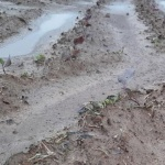 연이은 태풍에 가을농사 큰 피해...농민들 '망연자실'