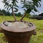 세계유산본부, '난 화분 만들기' 프로그램...21일부터 선착순 접수