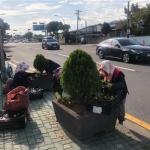용담2동-한국자유총연맹, 도로변 계절화 식재